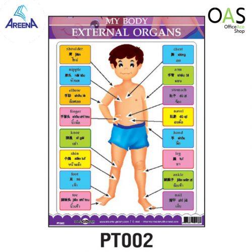 PT002 : MY BODY – EXTERNAL ORGANS